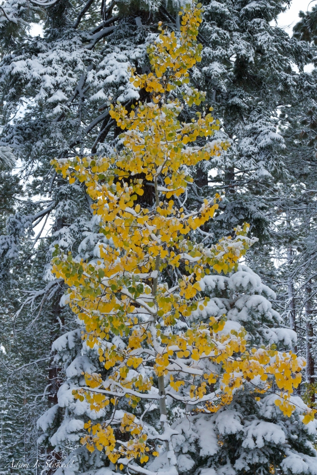 Fall colors and snow in Tahoe