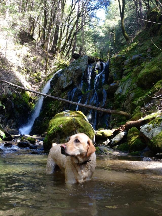 lower yuba river trail waterfall