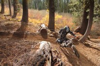 Downieville Downhill