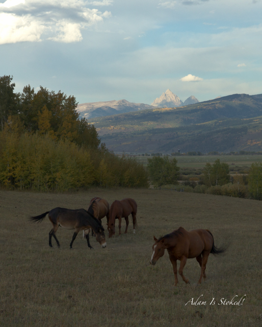 horses-driggs-idaho-tetons