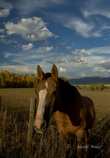 horses-driggs-idaho-grand-teton
